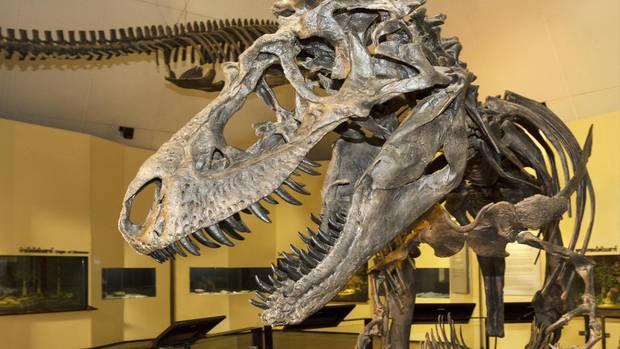 Knochen eines kleinen Tyrannosaurus Rex werden bei Ebay angeboten