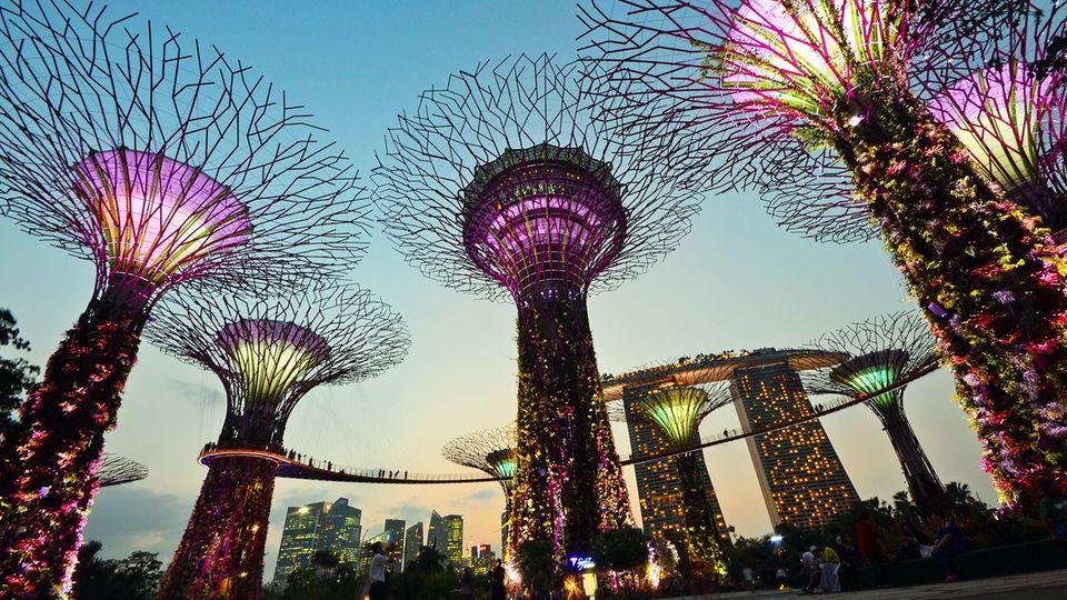 Die Super Trees ganz nah in der Abenddämmerung: Die 50 Meter hohen Stämme sind vertikal begehbare Gärten und eröffnen einen neuen Blick auf die Stadt und ihre ursprüngliche Flora.
