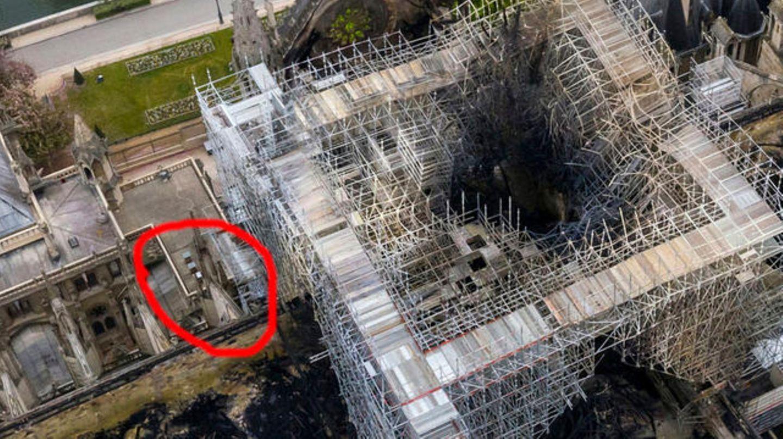 Bienen von Notre-Dame haben überlebt
