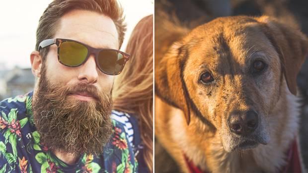 Sind Bärte so dreckig wie Hundefell?
