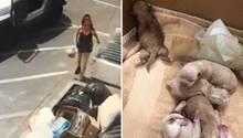 Eine Amerikanerin wirft eine Plastiktüte – mit sieben Hundewelpen – in eine Mülltonne.