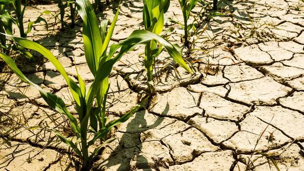 Wetter in Deutschland: Kommt in diesem Sommer die Dürre zurück?