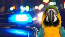 Ab in den Käfig: Papagei warnte Besitzer vor Razzien