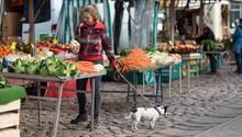 Hund auf dem Markt