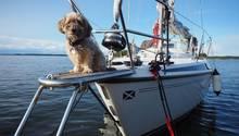 Hund auf dem Bug des Schiffes