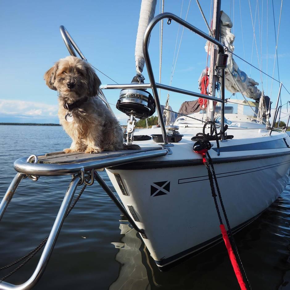 Urlaub in Südschweden: Segeltörn mit Hund: Wenn der Urlaub zum Experiment wird