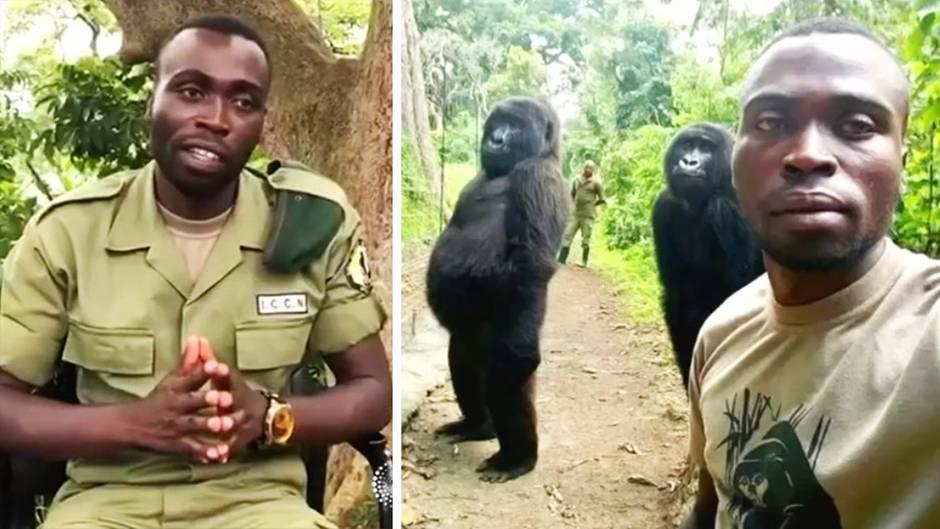 Gorilla-Selfie