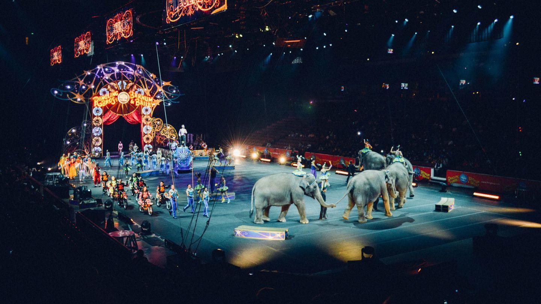 Die Landwirtschaftsministerin will Wildtiere im Zirkus nicht verbieten
