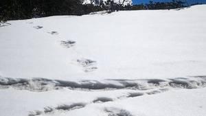 Angebliche Yeti-Spuren