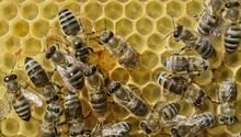 In Texas wurden über 500.000 Bienen getötet (Symbolbild)