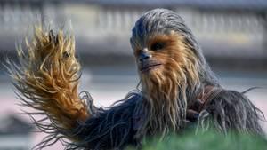 Chewbacca ist einer der größten Lieblinge der Fans