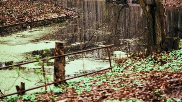 Wichtiger Ortder Kindheit: der verwunschene Wald von Düsternbrook