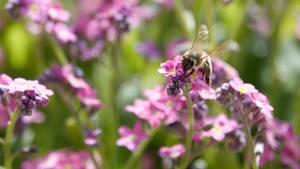 Eine Biene sitzt auf einer Blume