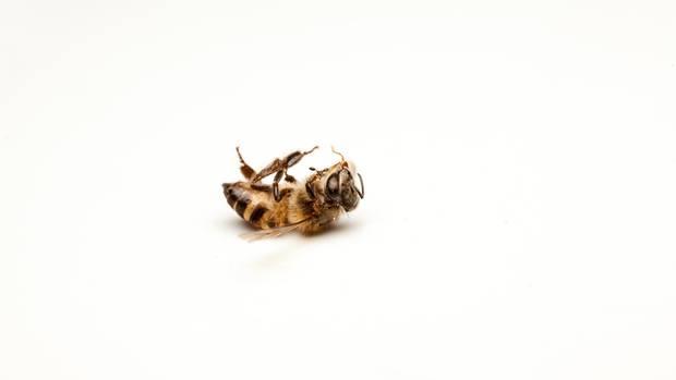 Wie sieht unsere Welt ohne Bienen aus?