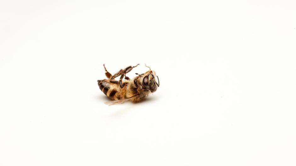 Bericht Zum Artensterben: Wie Sieht Eine Welt Ohne Bienen