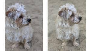 Zwei Vergleichsfotos von einem Hund im Sand