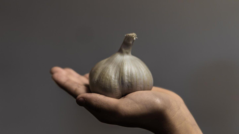 Hand hält Knoblauchknolle vor grauem Hintergrund.