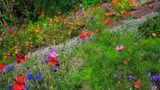 """6. Magerkur für den Boden  In einer durch Landwirtschaft und Stickstoff-Abgase überdüngten Landschaft sind blühende Magerrasen rar geworden. Im Garten können Sie mit etwas Körpereinsatz enien anlegen, indem Sie Ihren Boden auf Diät setzen: Grasnarbe abheben, den Boden darunter mit Sand """"verdünnen"""" und Wildblumen einsäen."""