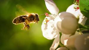 Insektenretten