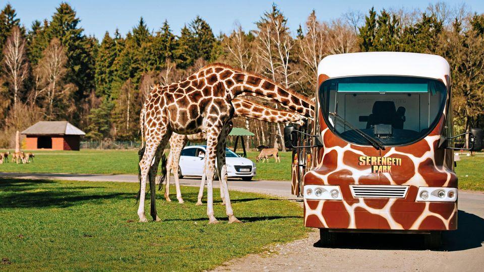 Freizeitparks in Deutschland: Serengeti-Park