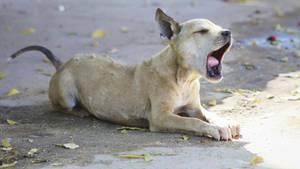 Straßenhund Tollwut Philippinen