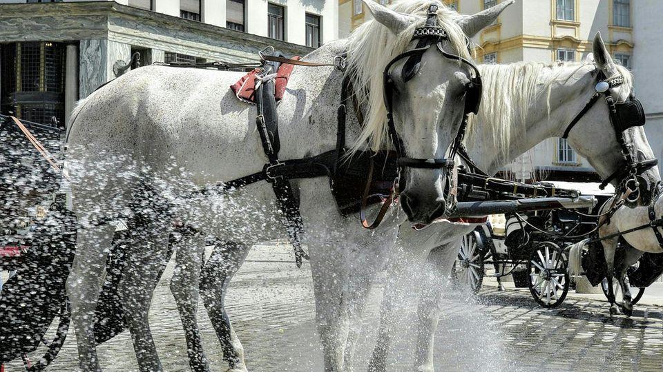 Ab 30 Grad Celsius im Schatten bekommen die Kutschenpferde in Berlin hitzefrei