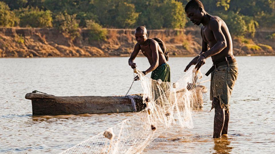 Das Fischen im sambischen Fluss Luangwa ist gefährlich. Immer wieder attackieren Krokodile und Flusspferde.
