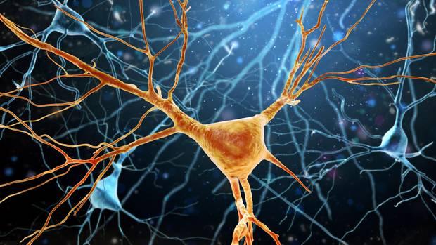 Nervenzellen: WHO veröffentlicht erstmals Leitlinien um Demenz vorzubeugen