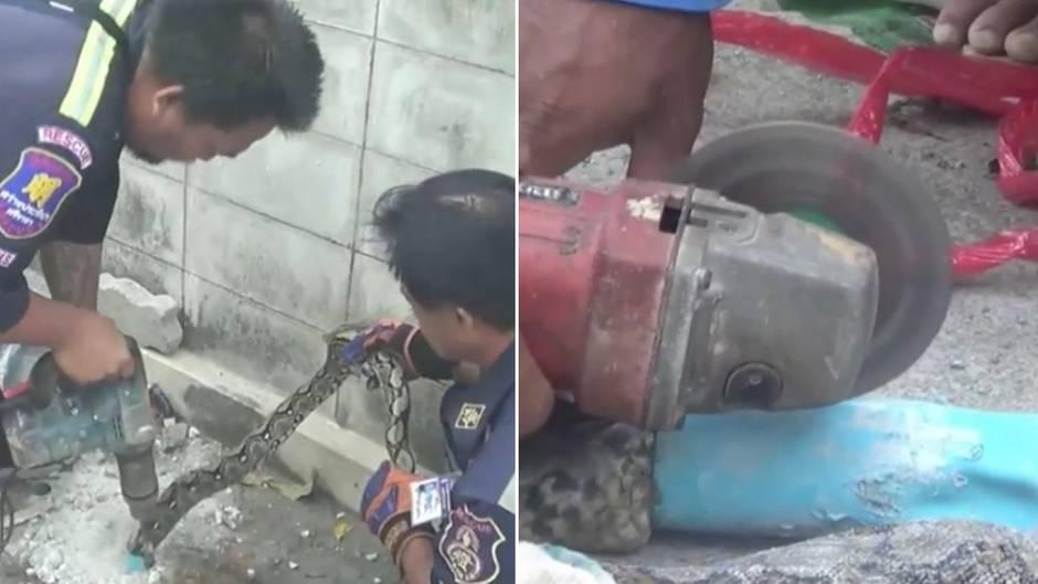 Rettungsaktion in Thailand: Missliche Lage: Python steckt in Abflussrohr fest - Helfer rücken mit Kreissäge an