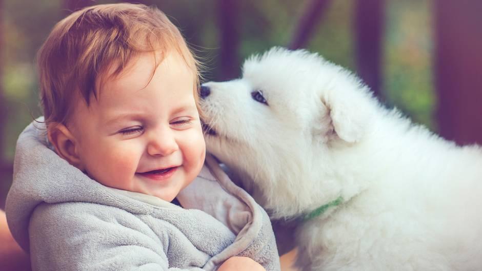Ein Kind lacht, weil ein Hund an seinem Ohr leckt