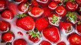 Erdbeeren sind sehr empfindlich und selten keinesfalls unter einem harten Wasserstrahl gereinigt werden - dieser könnte die Beeren beschädigen, was zu unschönenmatschigen Stellen führt.  Am wohlsten fühlen sich Erdbeeren in stehendem Wasser wie einem Wasserbad. Wichtig dabei: Wer das Aroma der Beeren erhalten will, sollte sie zügig säubern und verarbeiten.
