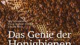 Das Genie der Honigbiene  Von Eric Tourneret, Sylla De Saint-Pierre und Jürgen Tautz      Auf der Suche nach einem Geschenk für einen Bienen-Fan? Hier ist es. Die rund einhundert beeindruckenden Bienen-Fotografien dieses großen Bildbandes dürften auf so manchen Imker wie Pin-Up-Girls wirken. Locker erzählen die französischen und deutschen Autoren entlang der doppelseitigen Bilder wie ein Bienenvolk funktioniert und mit welchen Experimenten ihr Leben wissenschaftlich untersucht wird. Denn die Fähigkeiten der Bienen sind genial. Zum Beispiel die Wabenstruktur. So können Waben aus 40 Gramm Bienenwachs 2000 Gramm Honig halten. Die Wabengänge sind exakt soweit voneinander entfernt, dass zwei Bienen Rücken an Rücken Platz haben – auf diese Weise wird kaum Wärmeenergie verschwendet. All das konstruieren die Bienen in völliger Dunkelheit. Ihre Sensoren für das Erdmagnetfeld dienen ihnen dabei als eine Art biologische Wasserwage.