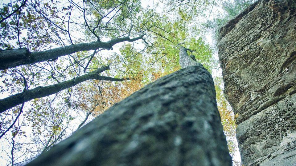 Kentucky: Ein Kleinkind hat ganz allein drei Tag lang im Wald überlebt (Symbolbild)
