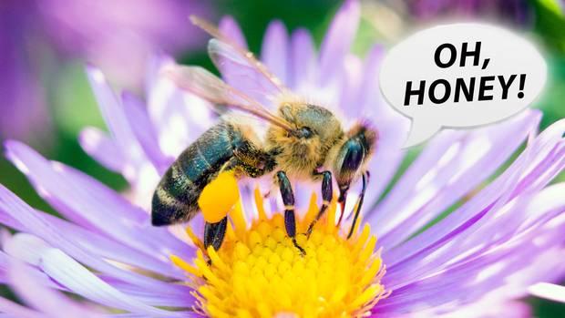 Bei Pornhub gibt es jetzt Bienen-Pornos
