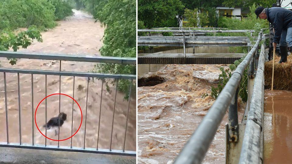 Lohfelden: Hund wird bei Unwetter von reißenden Fluten mitgerissen