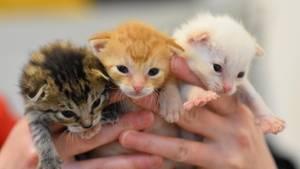 Drei Katzenbabys in Menschenhänden