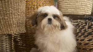 Gesunder Hund wird eingeschläfert, damit er mit Besitzerin begraben werden kann