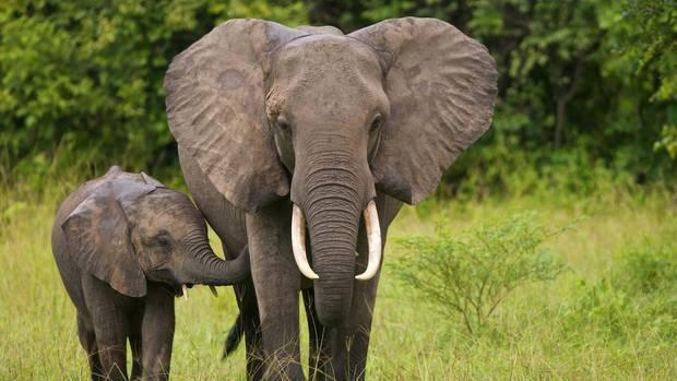 Das Elefanten-Jagdverbot in Botswana bestand seit 2014 (Symbolfoto)