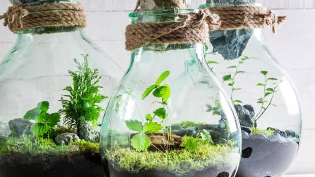Pflanzen Terrarium Einrichten : pflanzen im glas so einfach baust du dein ewiges terrarium neon ~ Watch28wear.com Haus und Dekorationen