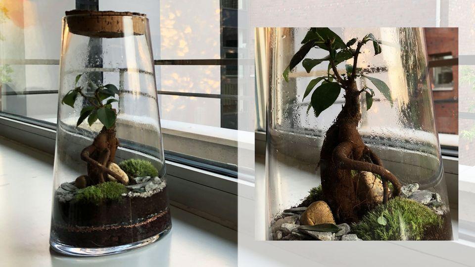 """Das ewige Terrarium eines Kollegen erinnert an die """"Ents"""" aus """"Der Herr der Ringe"""""""