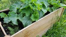 Im Garten ein Hochbeet selber anbauen