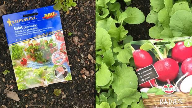 Nach dem Befüllen wird das Hochbeet mit Samen bepflanzt