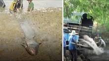 Nach einer Dürreperiode ist der Wasserspiegel in einem Reservoir in Phrae im Norden Thailands von vier auf einen Meter gefallen.