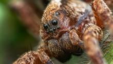 """""""Mir ist bewusst, dass Spinnen für viele wahre Angsttiere sein können. Das Bild zeigt eine Wolfspinne, vermutlich eine Trochosa sp. und ist ein Focusstack aus 9 Einzelbildern im Abbildungsmaßstab 2,5:1.""""  Mehr Fotos vonFlodzlin derVIEW Fotocommunity    Aktionen und Informationen aus der VIEW Fotocommunity aufFacebookoderTwitter"""