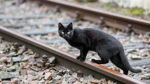 Katze lässt Rettungskräfte verzweifeln – und rettet sich dann selbst