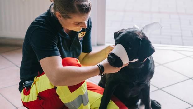 Erste Hilfe für den Hund: So leistet man Hilfe für einen Vierbeiner