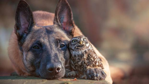 Tierfreundschaft: Hund Ingo und Kauz Poldi verstehen sich blendend