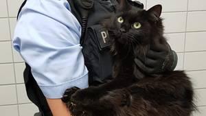 Eine blonde Polizistin hält die schwatze Maine-Coon-Katze Rosine auf dem Arm