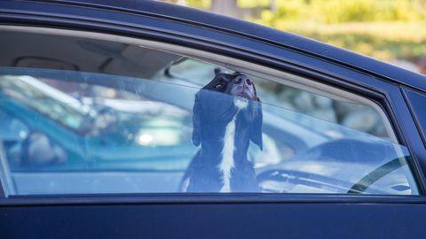 Ein Hund steckt seine Nase durch ein leicht geöffnetes Autofenster