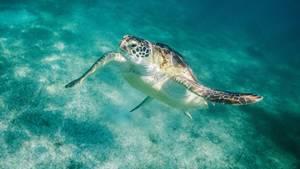 Meeresschildkröten wären in diesem Job deine sympathischen Kollegen